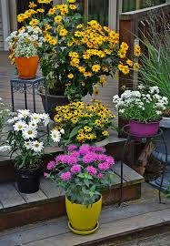 Outdoor Potted Plants Full Sun by The Complete Guide To Growing Perennials In Containers Walters
