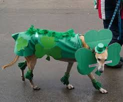 235 best st paddy u0027s pets images on pinterest st patrick u0027s day
