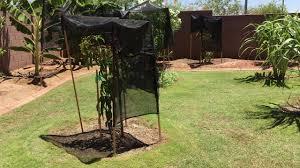 laks backyard orchard july 2016 youtube