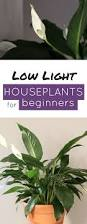 beginner houseplants peace lily