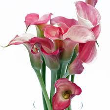 calla flower mini calla flower