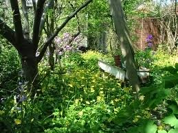 an overgrown back garden by aegiandyad on deviantart