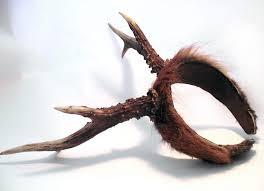 deer headband deer antler headband the bobbu