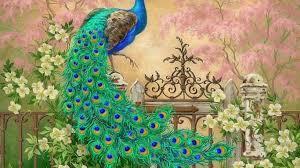 birds beautiful animal bird wallpaper of birds hd 16 9 high