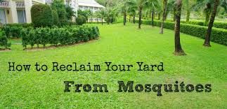 How To Design Your Backyard How To Reclaim Your Yard From Mosquitoes Wisconsin Mommy