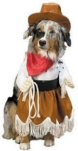 Cute Small Dog Halloween Costumes Dog Halloween Costume Contest Bella U0026 Diego U0027more