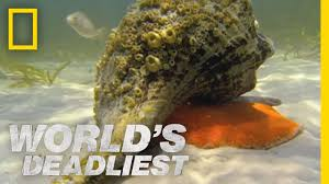 hermit crab vs conch world u0027s deadliest youtube