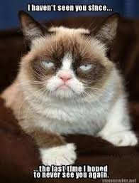 No Meme Grumpy Cat - pin by mary lorenz on grumpy cat pinterest lol