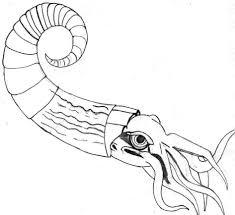 diagram squid dissection diagram