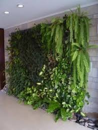 Interior Plant Wall Living Wall For Small Space Gardens Living Walls Small Spaces