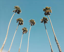 Palm Tree Wallpaper Wallpaper Of The Week California Palm Trees