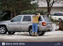 jeep christmas man securing christmas tree to top of jeep stock photo royalty