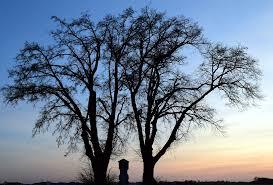 free photo tree winter kahl sunset free image on pixabay
