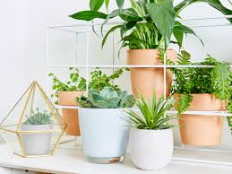 how to create an indoor garden 100 images 499 best go green