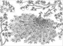 Paon entouré dun pommier  Paons  Coloriages difficiles pour adultes