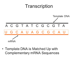 transcription and translation what is transcription it is a