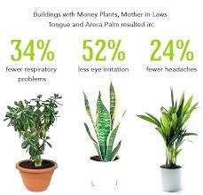 best light for plants low light plants for office joeleonard