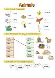 worksheet all about animals