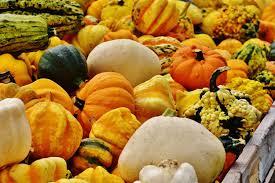 free images flower orange meal food harvest produce color