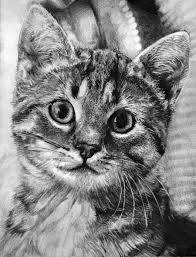 pencil draw kitty by amlam on deviantart