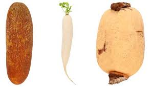 Chinese Root Vegetables - 6 things for boiling chinese soup u2013 jewelpie