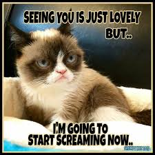 4862 best grumpy cat and pokey too images on pinterest