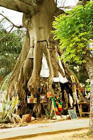 tree shop accra the usa opens the 2014 world cup against