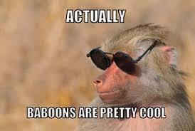 Baboon Meme - a congress of baboons