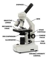 compound light microscope parts and functions compound light microscope diagram mad scientist pinterest
