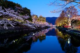 jeffrey friedl u0027s blog the hope of cherry blossoms in japan