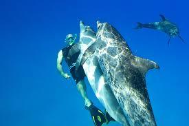 South Carolina wild swimming images Swim with dolphins wildquest wild dolphin swim bahamas jpg