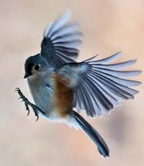 Bird Wing - bird wing shapes