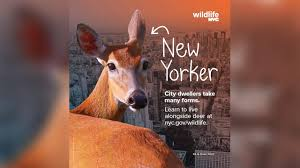 New York wild animals images New york city launches campaign to help residents co exist with jpg