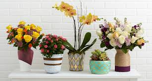Design Flower Pots 5 Ways To Make Flower Pots Pop Proflowers Blog