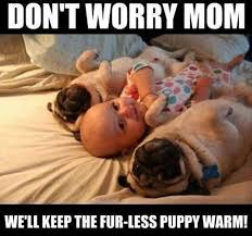 Baby Animal Memes - baby memes don t worry mom funny memes