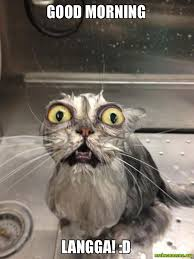 Good Morning Cat Meme - good morning langga d make a meme