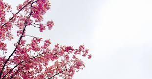 free images branch sky leaf flower petal produce