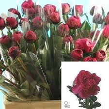Wholesale Peonies Peony Wholesale Flowers Uk Wedding Flowers Peonies