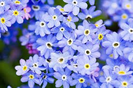 image of spring flowers blue spring flowers jigsaw puzzle game puzzlemobi