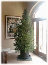 rent live christmas tree san francisco san jose santa cruz los gatos