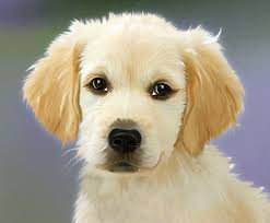 male dog names names for boy dogs and puppies dogs dad