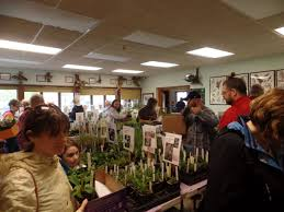 native plants names native plant sale growing in hammond go nwitimes com