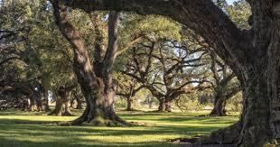 oak alley plantation floor plan plantation overview