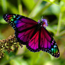 the meaning and symbolism of the word butterfly