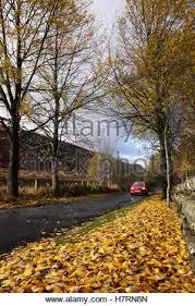 sun breaks through the leaves as autumn begins in birmingham uk