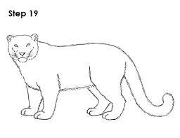 draw snow leopard