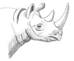 rhino sketch by tyrannoninja on deviantart