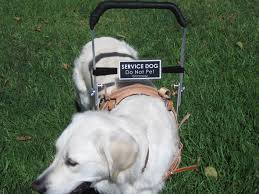 guide dog harness i am a service dog hope for christy