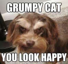 Grumpy Dog Meme - grumpy cat you look happy very grumpy dog quickmeme