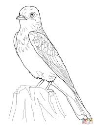 eastern kingbird coloring page free printable coloring pages